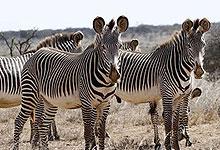 4 Days 3 Night Segera Retreat Lodge (Segera Ranch) Laikipia Fly-in Safari from Nairobi