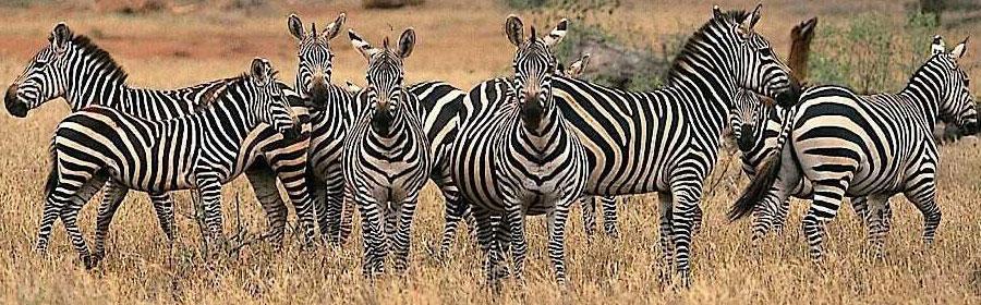 3 Days 2 Nights Tsavo West National Park Flying Safari